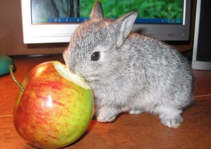 Правильное кормление яблоками