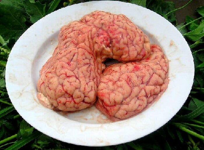 Свиной мозг