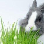 Свежая трава для кролика
