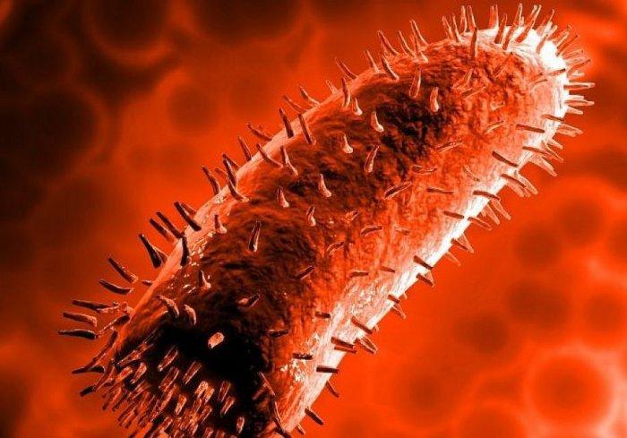 Вирус Neuroryctes rabid