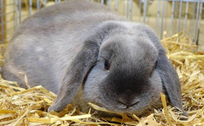 Кролик на подстилке из стружки