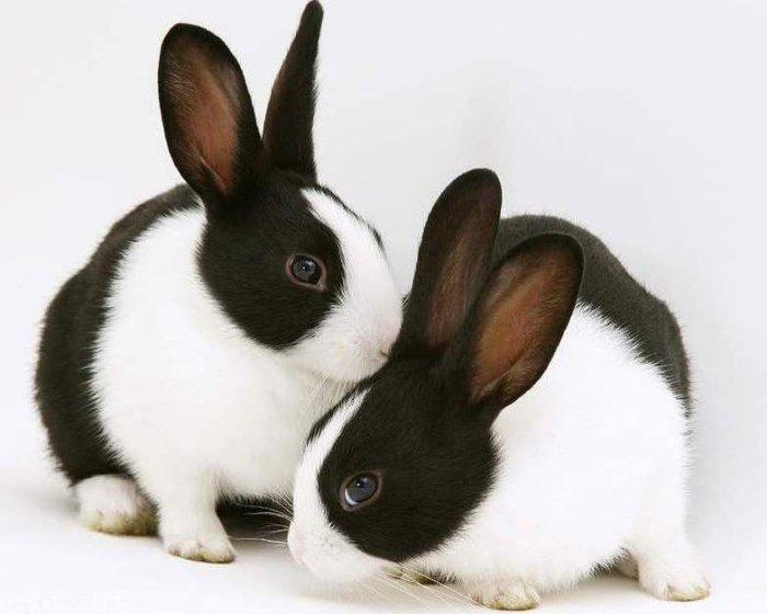 Черно-белые кролики