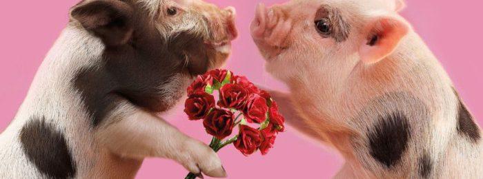 Охота у свиньи