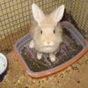 Больной крольчонок