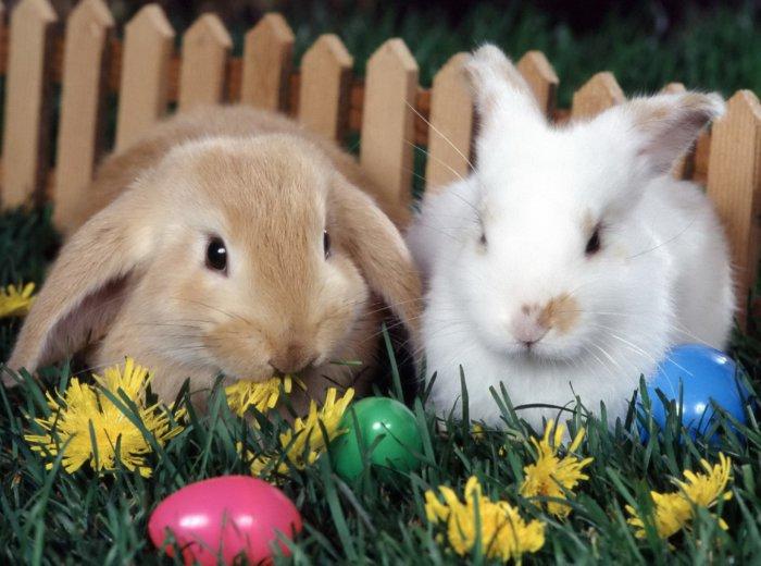 Одуванчик для кроликов
