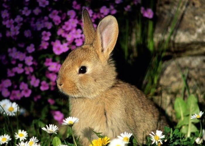 Признаки полового возбуждения у крольчихи