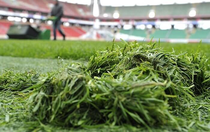 Свежескошенная трава