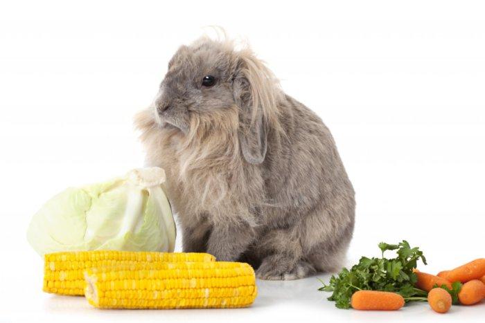 Кролик отказывается от сена из-за обилия другого корма
