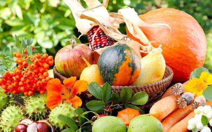 Для кормления подходят яблоки, морковь, кукуруза