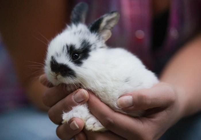 Кролик в руках фермера
