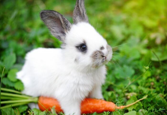 Летнее питание кролика