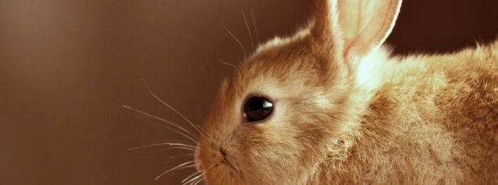 Кролик смотрит в камеру