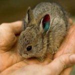Рекомендации по приручению животных