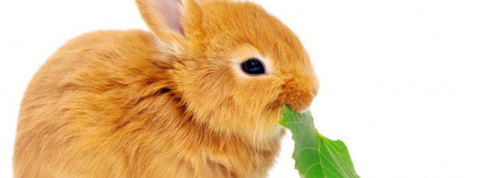 Кормление кролика
