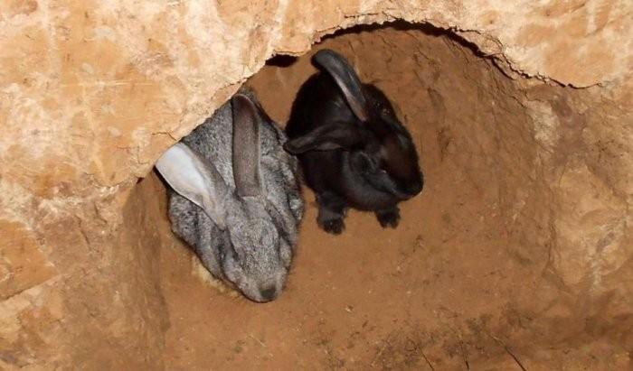 Разведение кроликов в ямах