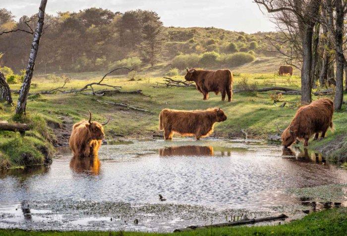 Молодняк может заразиться при питье воды из стоячих водоемов