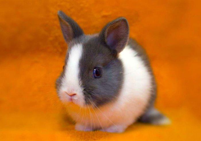 У кролика органы осязания – усики