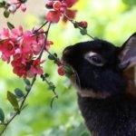 Кролик грызет веточки