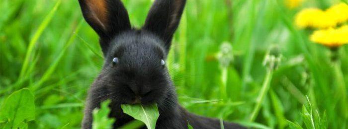 Кролик на выгуле