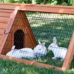 Просторная клетка ля кроликов