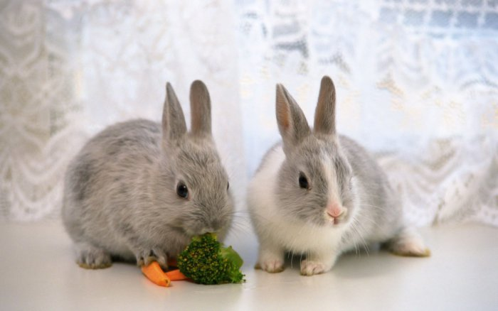 Кролики декоративной породы