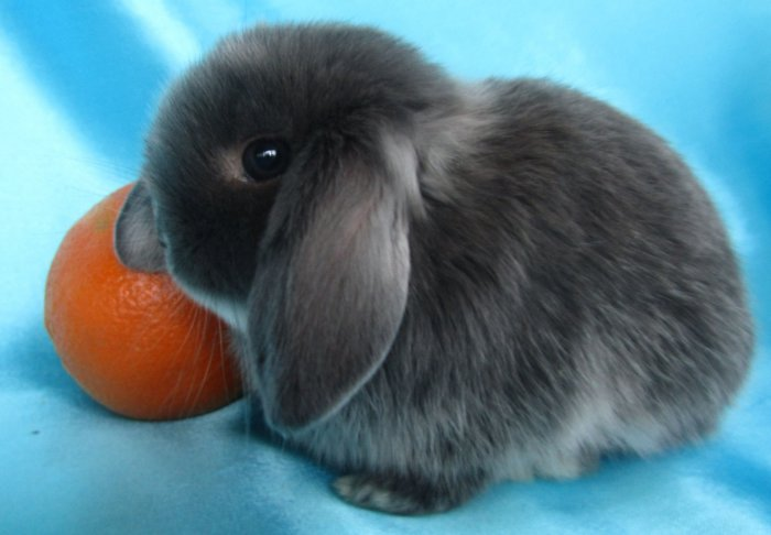 Кролик не идет на контакт