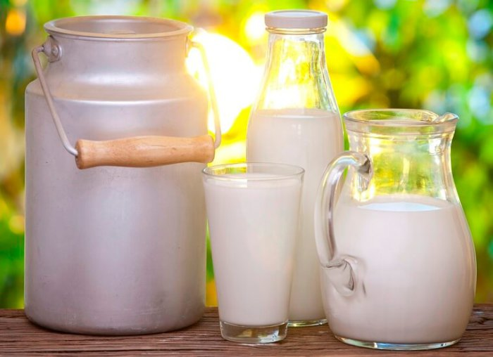 Суточные удои одной коровы могут доходить до 32 л