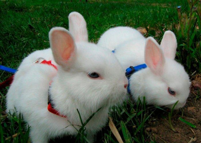 Декоративные кролики требуют тщательного ухода