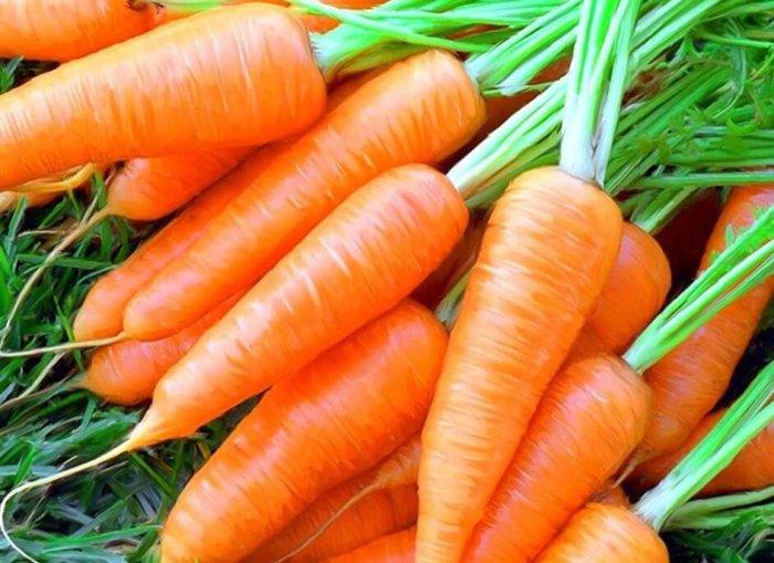 Морковь можно давать с 15-17 дня