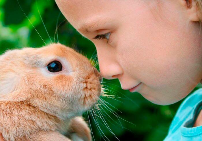 Декоративный кролик и ребенок
