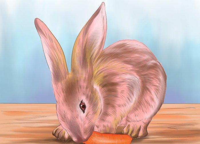 Поощрение кролика лакомством