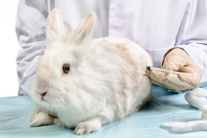 Вакцинация кролика