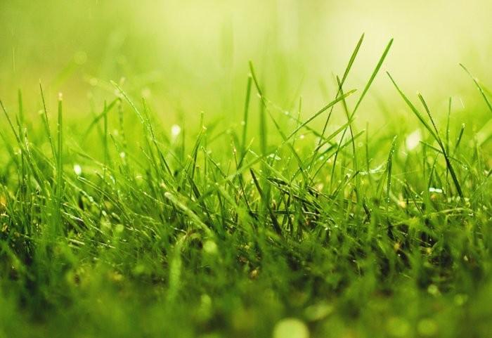 В рацион добавляется трава