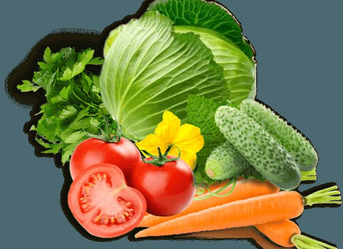 Овощи для кормления кроликов
