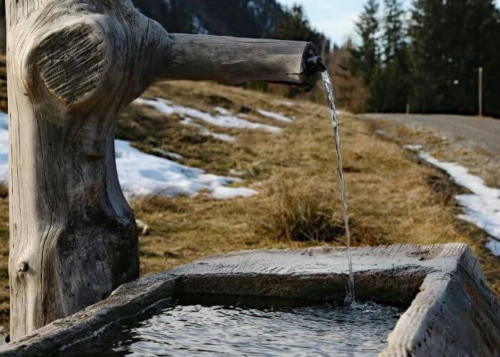 Приплоду необходимо обеспечить доступ к воде
