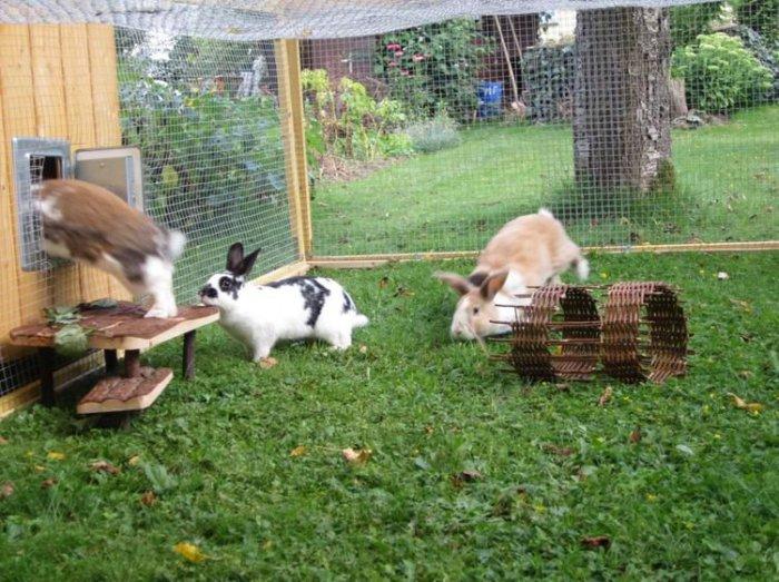 Дачное разведение кроликов