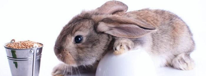 Зерно для кролика