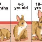Кролик в разном возрасте