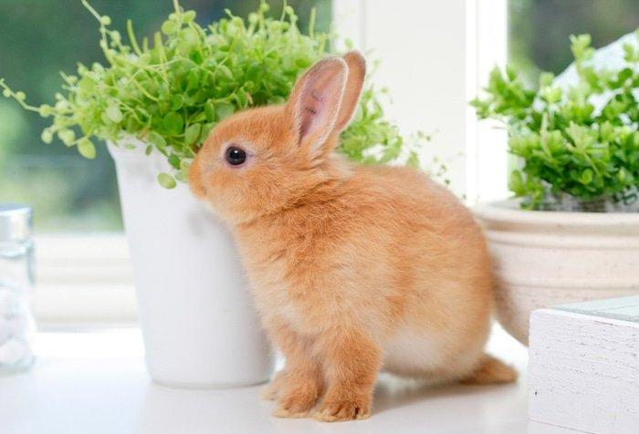 Кролик должен содержаться в чистоте