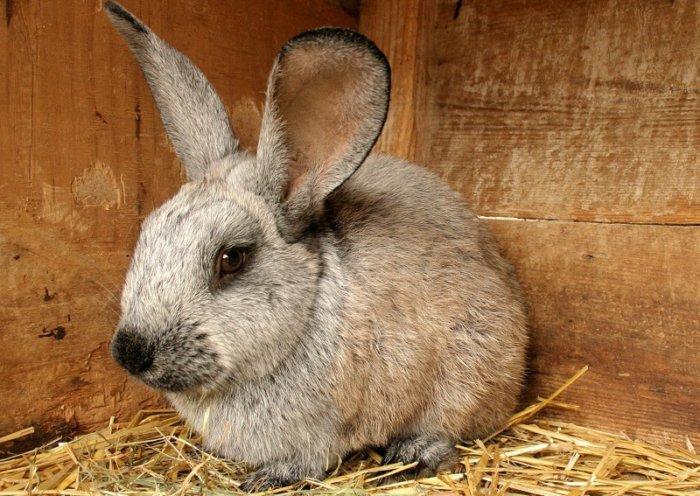 Кролик заболел