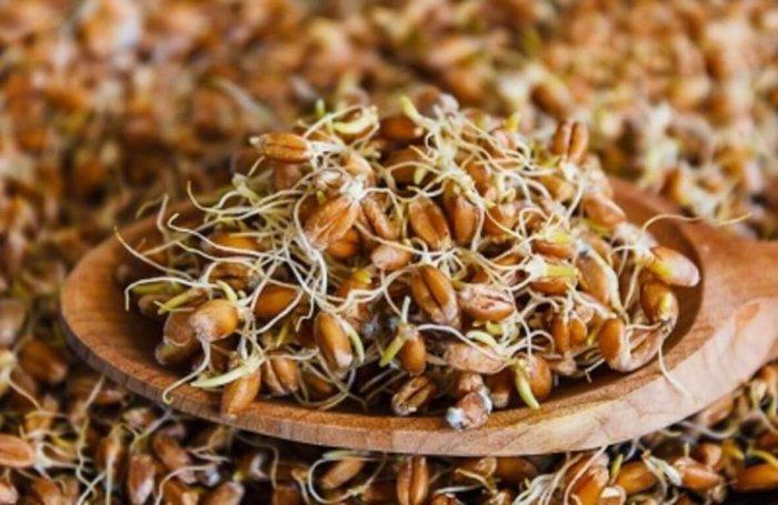 Пророщенное зерно для запаривания