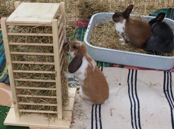 Разновидность сенника для кроликов