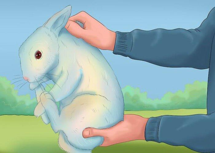 Правильный способ передать кролика