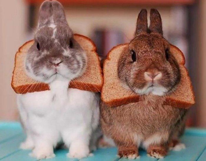 Кролики с хлебом