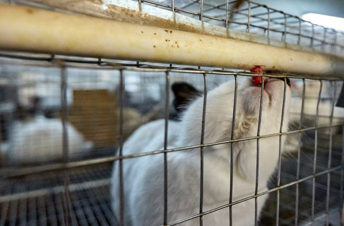 Кролик пьет из ниппельной поилки