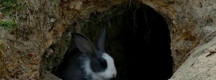 Кролик в яме
