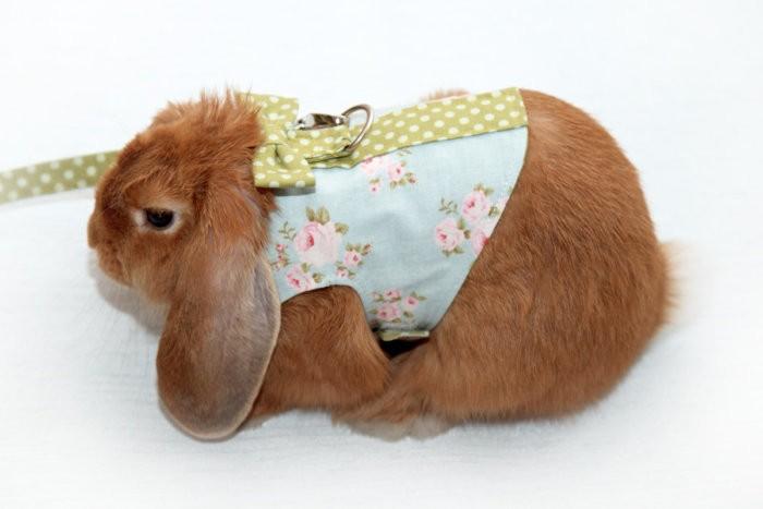 Декоративный кролик на шлейке
