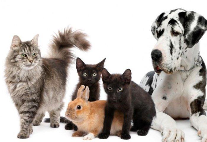 Чиктоник подходит для лечения большинства домашних животных