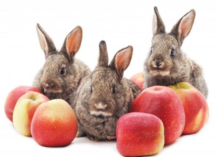 Яблоки для декоративных кроликов