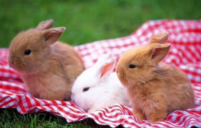 Кролики как за ними ухаживать в домашних условиях 796